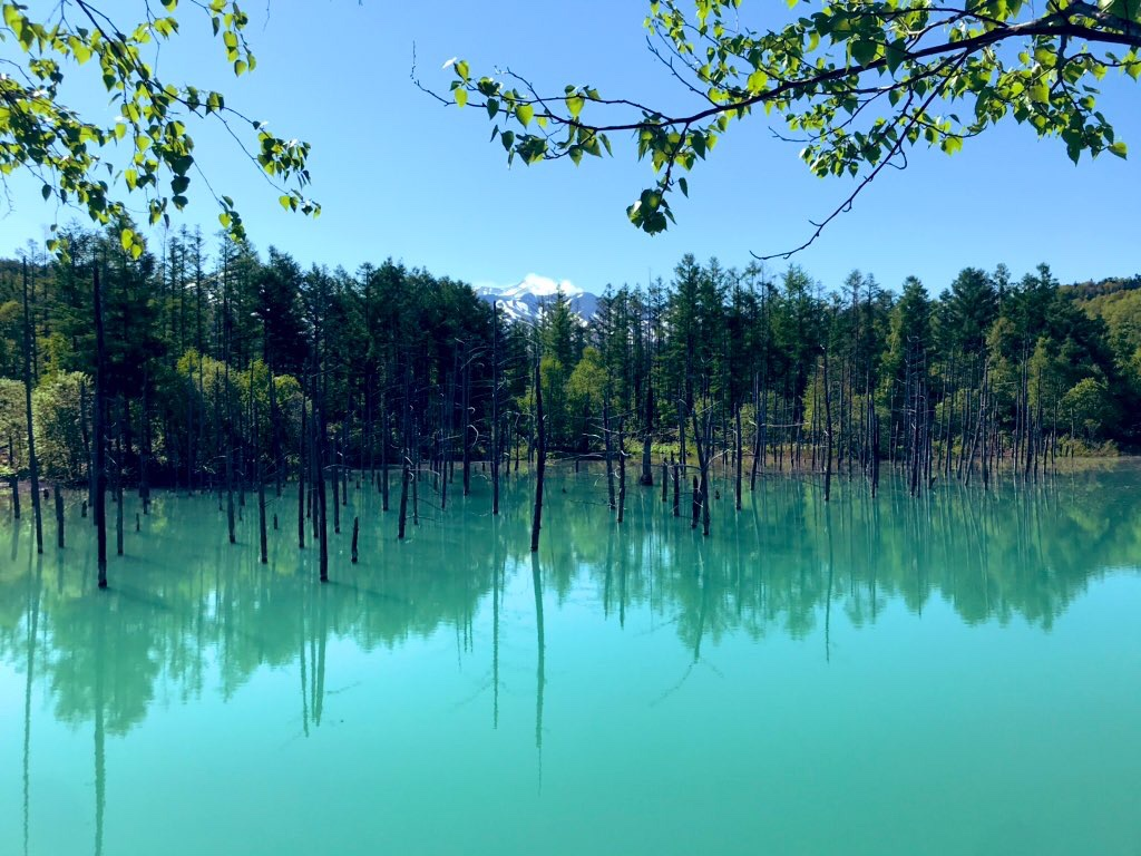 観光名所青い池は道の駅びえい白金ビルケから約2km